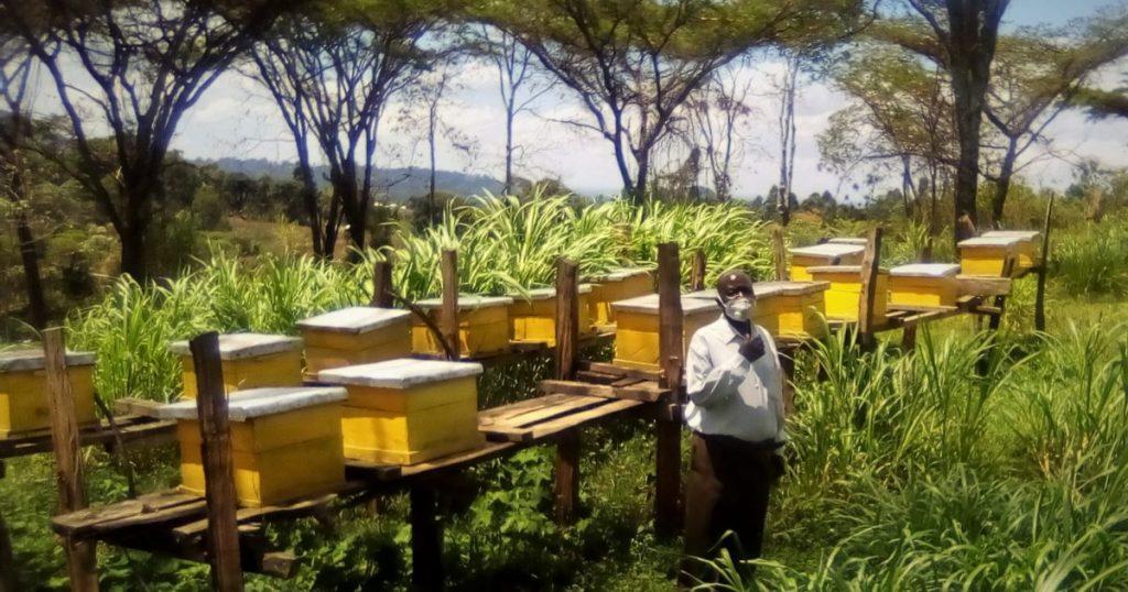 Bee keepers in Kenya - Greenpeace @ Johann Piber from Pexels