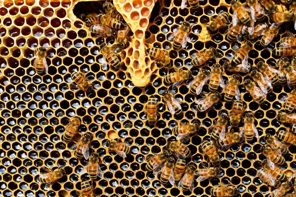 Bee keepers in Kenya - Greenpeace © Pixabay Pexels