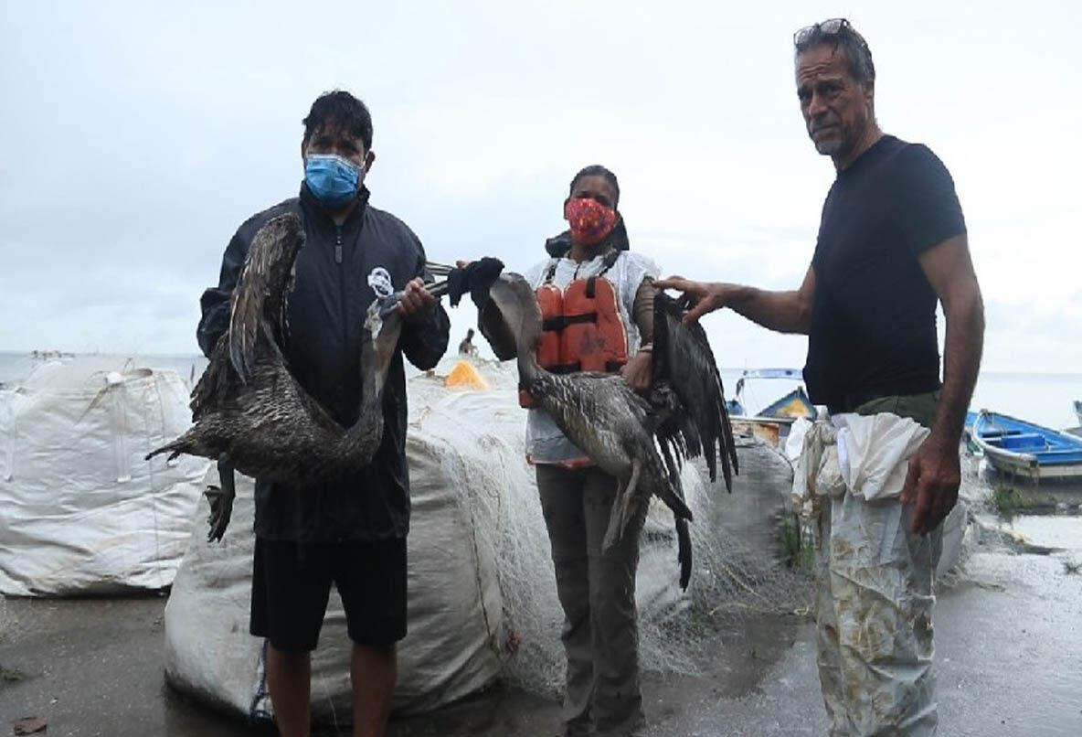 Drenched IN oil: Fishermen and Friends of the Sea's Gary Aboud, right, and other members of the Carli Bay Fishing Association hold two oil-drenched pelicans on Sunday after a site visit in the Gulf of Paria in the vicinity of Pointe-a-Pierre where an oil spill was seen on Saturday. —Photo: CINDY RAGHUBAR TEEKERSINGH
